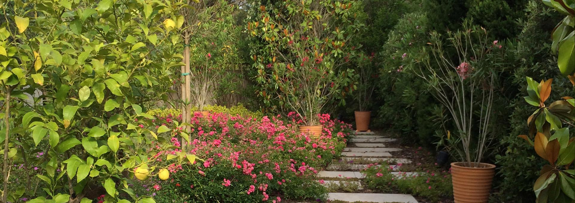 Gros pins jardinier paysagiste hy res var toulon am nagement paysager entretien espace vert 83 for Paysagiste toulon